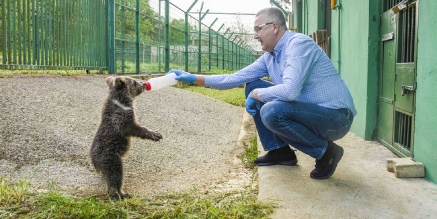 Başkan, ayıyı elleriyle besledi