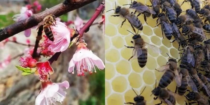 Gökçeada arısına özel